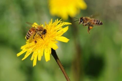 Ong cũng giống chúng ta khi đưa ra quyết định