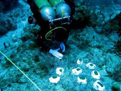 8 ngày dưới biển để cải thiện phương pháp phục hồi san hô