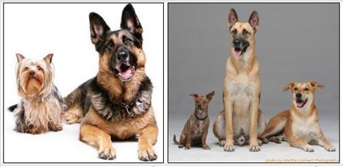 Giải mã bí mật tính đa dạng ở loài chó