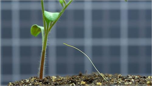 Trung thành với gốc rễ