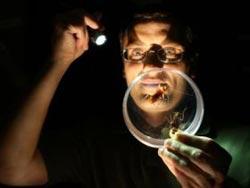 Thuốc diệt côn trùng có thể diệt 3 thế hệ gián