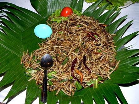 Nguồn thực phẩm từ côn trùng
