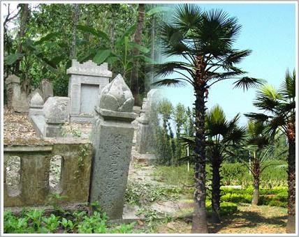 Mỗi ngôi mộ sẽ là một cây?
