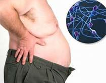 Đàn ông béo có tinh trùng kém