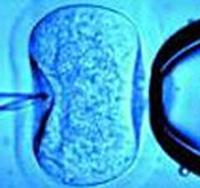 Sinh ra từ ống nghiệm, sức khỏe có bị ảnh hưởng?