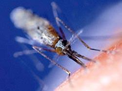 Phương thức mới chống bệnh sốt rét