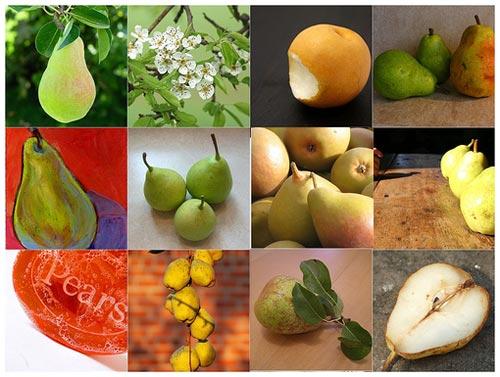 Tại sao lê dễ hỏng hơn táo trong quá trình bảo quản?