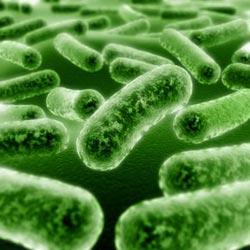 Vi sinh vật có thể là giải pháp cho vấn đề năng lượng toàn cầu hay không?