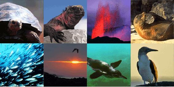 Bằng cách nào quần đảo Galapagos thay đổi thế giới?