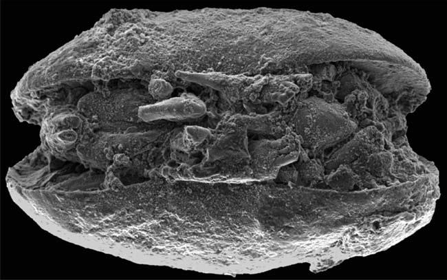 Hóa thạch tiết lộ Nam Cực ấm hơn trong quá khứ
