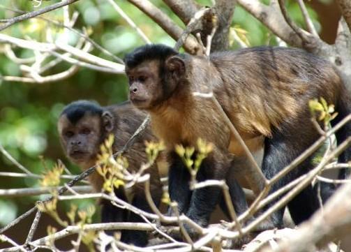 Khỉ cũng biết chia sẻ với đồng loại