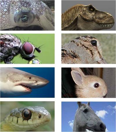 Mắt tiến hóa để có năng lực tia X