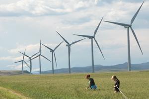 Tuabin gió là nguy cơ tử vong của loài dơi