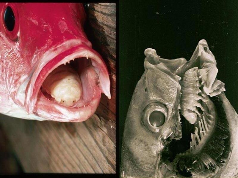 Hàng trăm loài mới phát hiện tại rặng san hô ở Australia (Phần II)