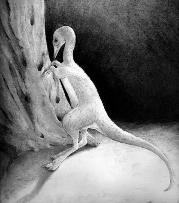 Phát hiện loài khủng long nhỏ như gà ở Hoa Kỳ