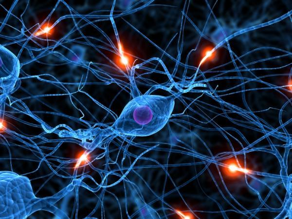 Liên hệ di truyền giữa hệ miễn dịch và hệ thần kinh