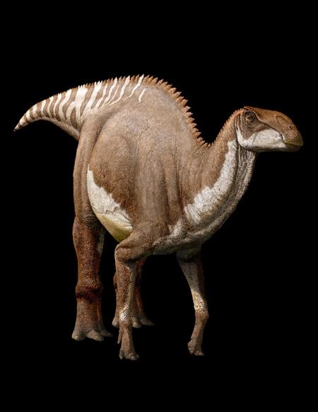 Thành phần trong ruột tiết lộ chế độ ăn của khủng long