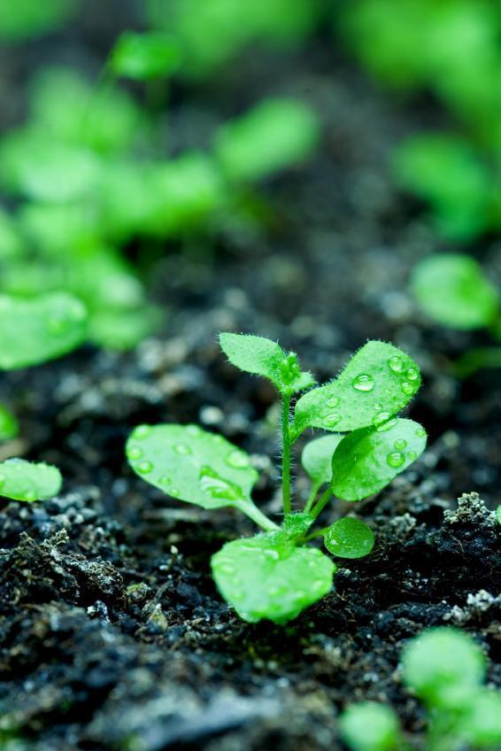 Công thức giúp thực vật sống lâu hơn