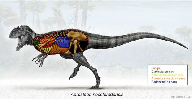 Loài khủng long to bằng xe buýt hô hấp giống chim