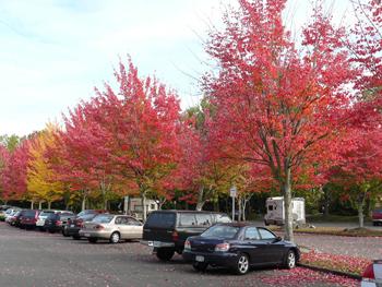Tại sao lá cây có màu đỏ vào mùa thu