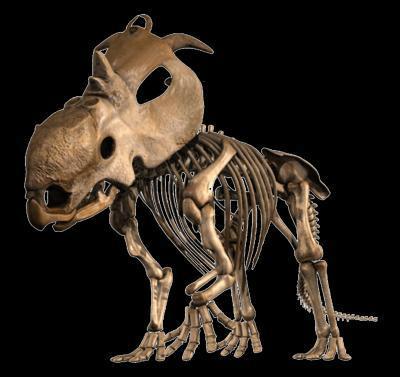 Loài khủng long mới có sừng tại Alberta, Canada