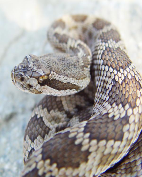 421.000 vết cắn và 20.000 trường hợp tử vong do rắn cắn hàng năm.