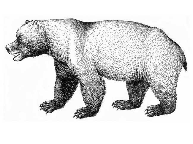 Bí ẩn sự kiện tuyệt chủng của loài gấu hang