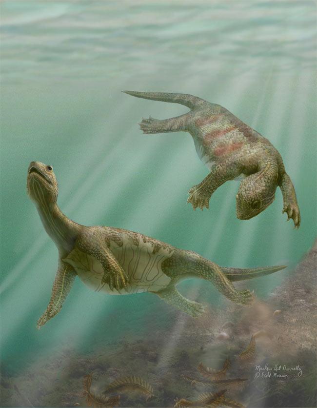 Loài rùa cổ nhất chỉ có mai ở bụng