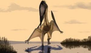 Phát hiện loài thằn lằn bay khổng lồ mới