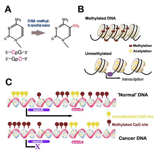 Phát hiện enzim tham gia vào ung thư thời kỳ đầu