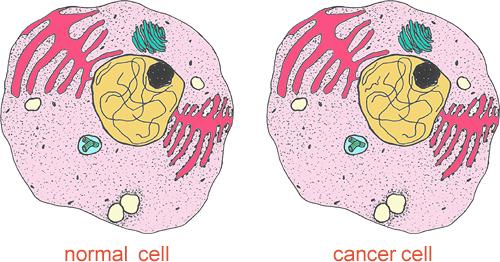 Phân biệt tế bào thường và tế bào ung thư