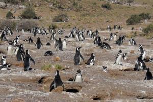 Công viên mới bảo tồn chim cánh cụt và các loài vật biển tại Argentina
