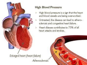 Phân tử kiểm soát huyết áp
