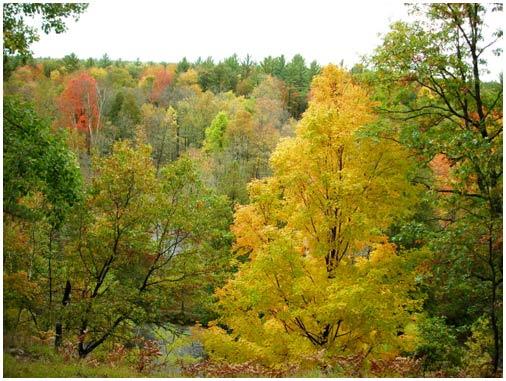 Cây rừng tại Mỹ chết nhanh hơn vì khí hậu