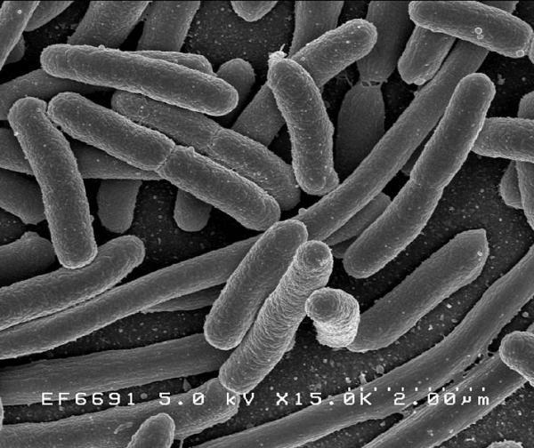 Vi khuẩn và năng lượng