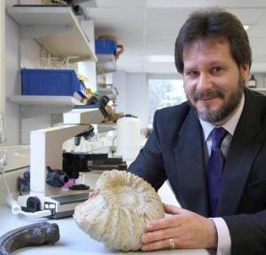 Hóa thạch khủng long hoàn toàn khớp với cây tiến hóa