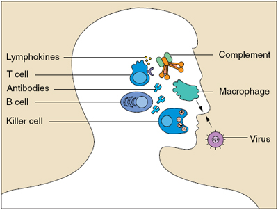 Cấu trúc não củng cố khả năng miễn dịch
