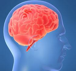 Phát hiện gen lão hóa ở não người