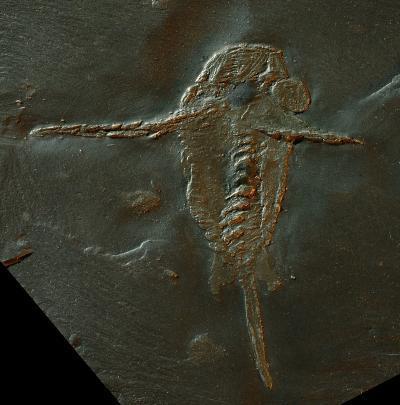 Hóa thạch 390 triệu năm tuổi mang nguồn gốc móng vuốt