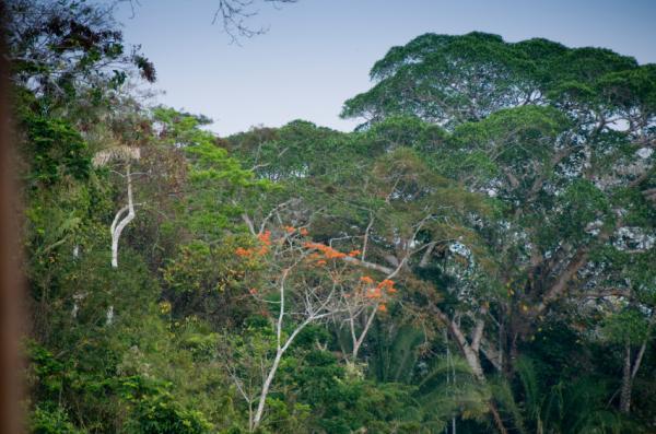 Hạn hán đe dọa bồn chứa cácbon Amazon