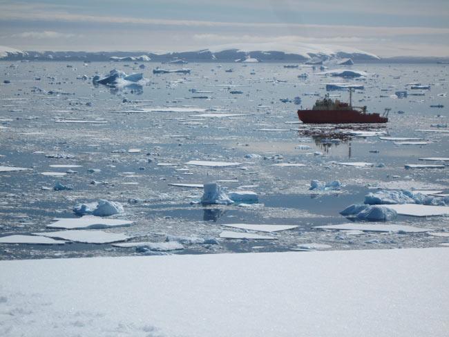 Khí hậu nóng lên ảnh hưởng tới chuỗi thức ăn Nam Cực