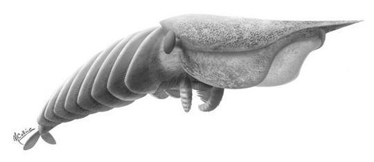 Quái vật săn mồi 500 triệu năm tuổi