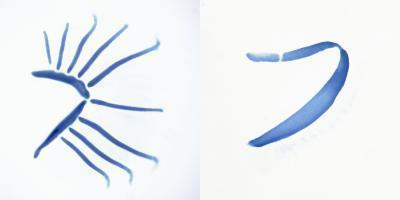 Quá trình tiến hóa của vây, chi và mang