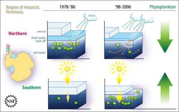Thay đổi khí hậu ảnh hưởng đến đời sống trên bán đảo Nam Cực