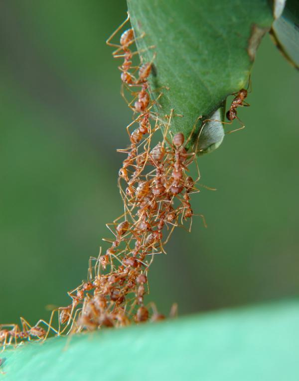 Côn trùng và con người có hoạt động nhóm đích thực