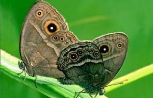 Cánh bướm vừa quyến rũ vừa đáng ghét