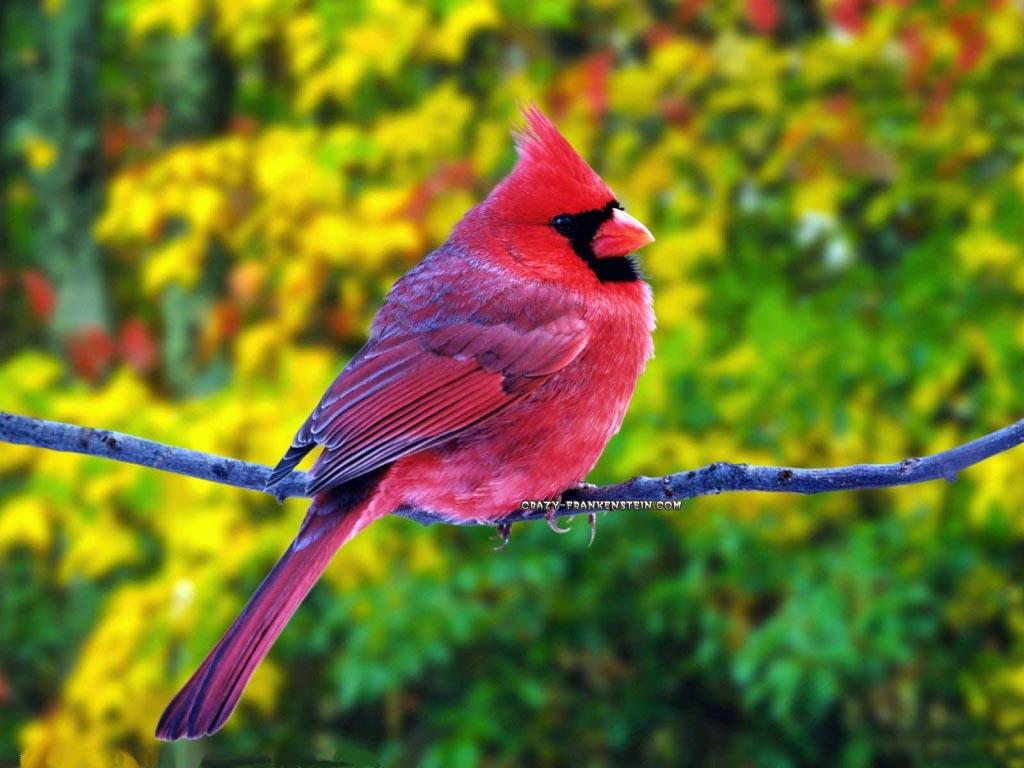 Nguồn gốc màu lông ở chim?