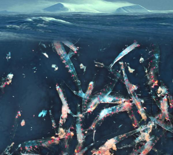 Cácbon biển: Giả thuyết làm giàu sắt