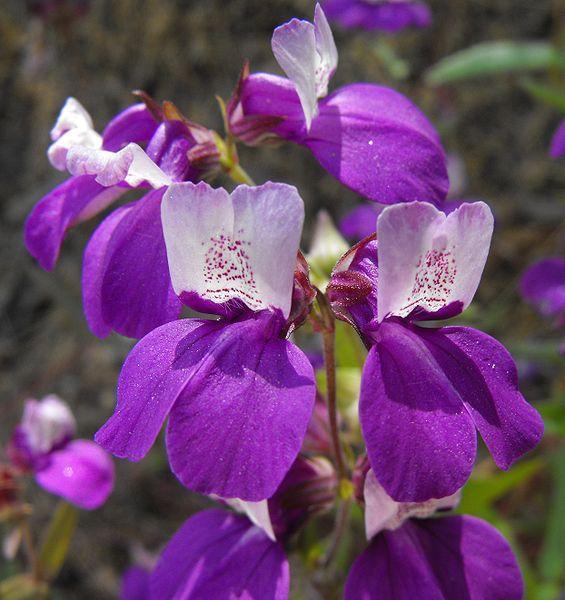 Đời sống tình dục của thực vật tiết lộ sự bất đồng giữa hai giới