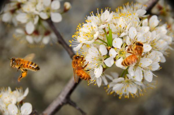 Khóa dán trên cánh hoa giúp ong bám chắc